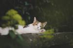 Обои Кошка лежит на бетонном ограждении