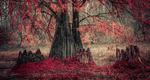 Обои Осеннее дерево, by donato caragnano