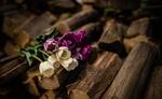 Обои Белые и сиреневые тюльпаны на дровах, by Artsy Vibes