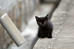 Обои Черный котенок на улице