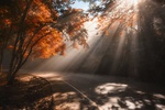 Обои Асфальтированная дорога среди осеннего леса под лучами солнечного света, by Pakkawit Anantaya