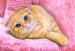Обои Рыжий кот с гетерохромией на лежанке