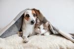 Обои Мышка, собачка и кошка под пледом