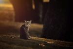 Обои Кошка сидит на земле с осенними листьями