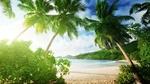 Обои Тропический пляж на фоне пальм в яркий солнечный день