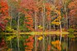 Обои Осенние деревья у озера, by David Dai