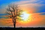 Обои Осеннее дерево на фоне неба на закате с летящими птицами, by ITG photography