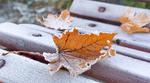 Обои Осенние листья на лавочке в инее, by JKLS photography