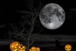 Обои Черная кошка сидит у светильника Джека ночью на фоне полной луны, by susan-lu4esm