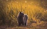 Обои Серая кошка на природе, фотограф Marko Blazevic