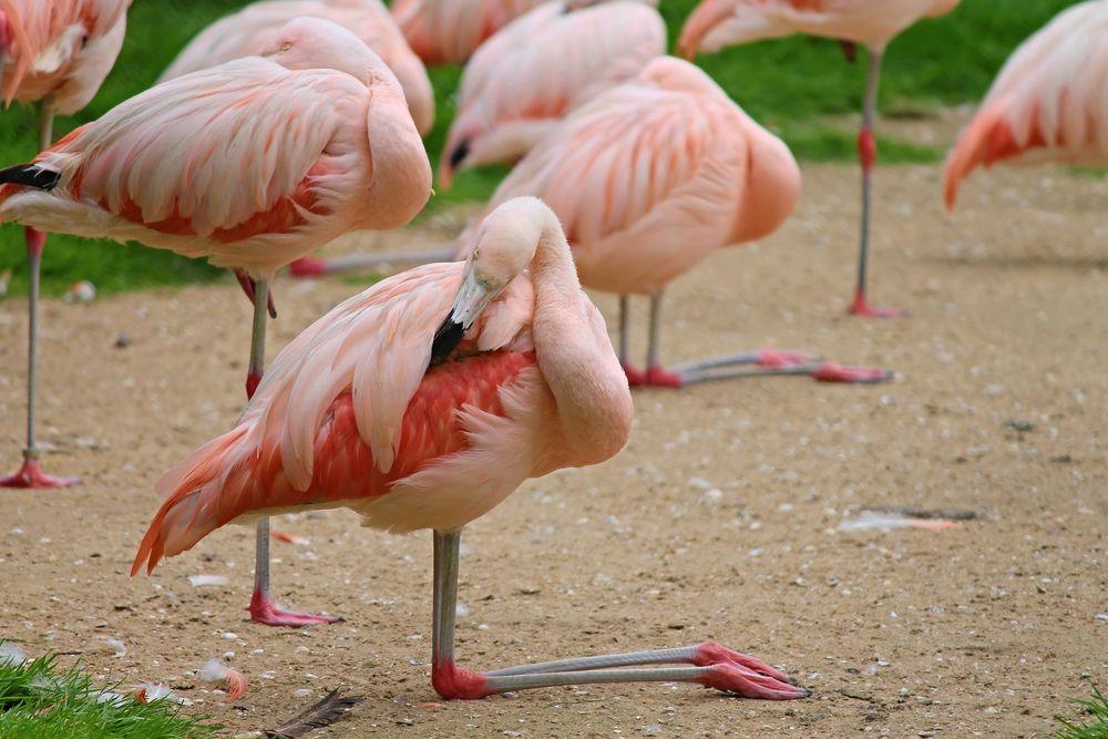 Розовые птицы картинки