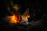 Обои Фенек с сияющими украшениями на ушах лежит на земле, by 0l-Fox-l0