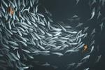 Обои Рыбы в пруду, by GaudiBuendia