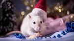Обои Мышка в новогоднем колпаке сидит рядом с елочными украшениями