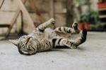 Обои Кошка лежит на асфальте, by Ben Chen