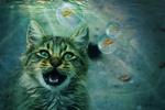 Обои Кошка с открытым ртом на фоне рыбок в пузырьках, by cocoparisienne