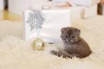 Обои Серый котенок сидит рядом с подарками, by keytArt