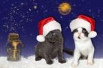Обои Два котенка в новогодних шапочках на фоне луны и звезд и закрытой бутылки с надписью merry xmns / с рождеством, by Gundula Vogel