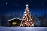 Обои Наряженная новогодняя елка у деревянного дома на фоне ночного заснеженного леса