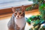 Обои Кошка у новогодней елке, by Jessica Lewis