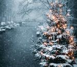 Обои Новогодняя елка на улице города