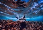 Обои Гигантская черепаха под водой, by 12019