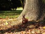 Обои Белка стоит на осенней листве у ствола дерева