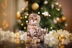 Обои Кошечка сидит на полу на фоне новогодней елки