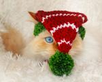 Обои Кошка в вязанном новогоднем колпаке