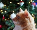 Обои Рыжая кошка на фоне новогодней елки