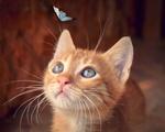 Обои Рыжий котенок смотрит на бабочку, by Birgit