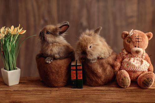 Два крольчонка сидят в цветочных горшочках среди цветов, книг и игрушечного медведя