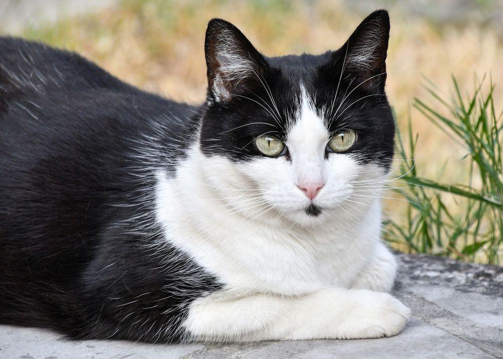 Картинки черно белой кошки с зелеными глазами