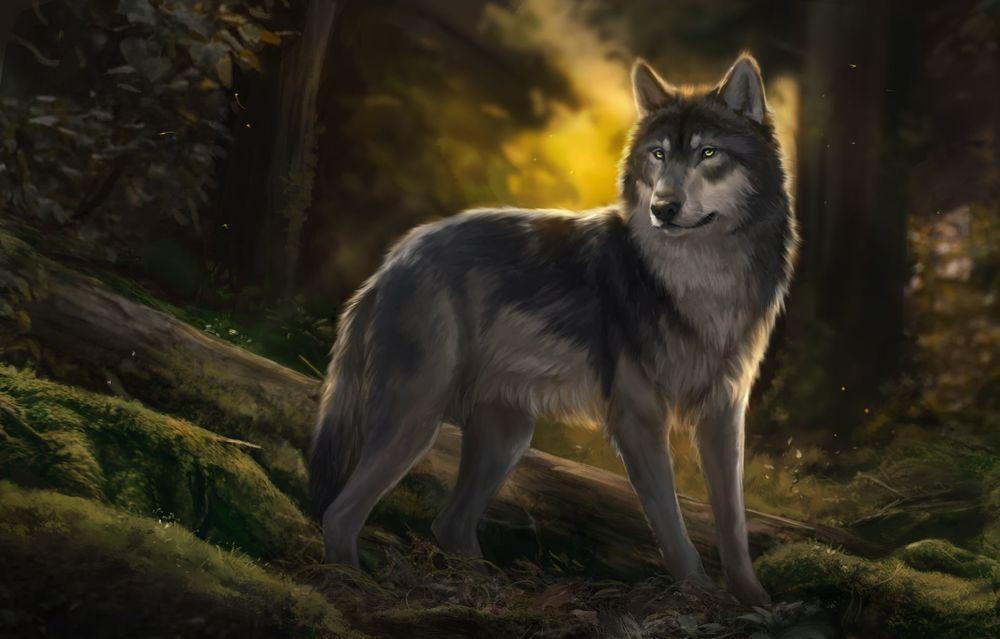 Обои для рабочего стола Волк в лесу, BY Muns11