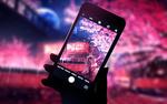 Обои Некто фотографирует на телефон цветущую сакуру, by smile
