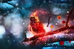 Обои Огненная птичка на ветке под первым снегом, by JosefinaCS