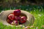 Обои Яблоки в шляпе лежат на траве, by Ingrid