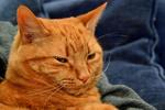 Обои Рыжий кот, by cricketumpire