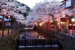 Обои Цветущая весной сакура, свесившая свои ветки над узким каналом, проходящем вдоль старой улочки вечерней порой, Tokyo / Токио, Japan / Япония