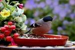Обои Снегирь сидит в тарелке с семечками, на столе цветы и красные ягоды на размытом фоне, by Christiane