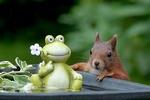 Обои Белка заглядывает в емкость с игрушечным лягушонком на размытом фоне, by Christiane