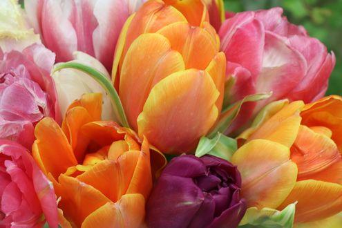 Конкурсная работа Букет разноцветных тюльпанов, by Olga Oginskaya