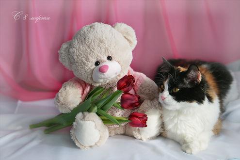 Конкурсная работа Плюшевый мишка с тюльпанами и трехцветная кошечка (С 8 Марта)