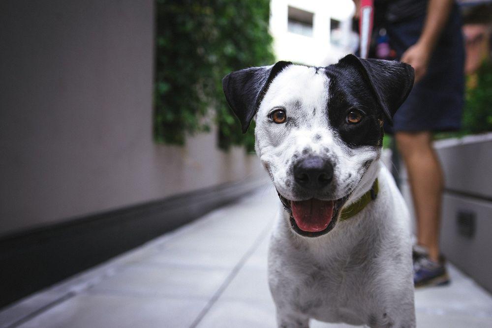 Обои для рабочего стола Собака с открытым ртом, by Pexels
