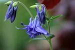 Обои Сиреневые цветы на размытом фоне, by Sonja Kalee