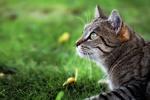 Обои Полосатый кот в траве, фотограф Martin Schаfer