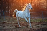 Обои Белая лошадь бежит по земле, by rihaij