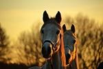 Обои Лошади на размытом фоне, by rihaij