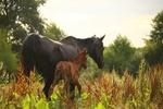 Обои Лошадь с жеребенком стоят в траве, by rihaij