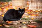 Обои Черный кот сидит на земле, фотограф Martin Schаfer